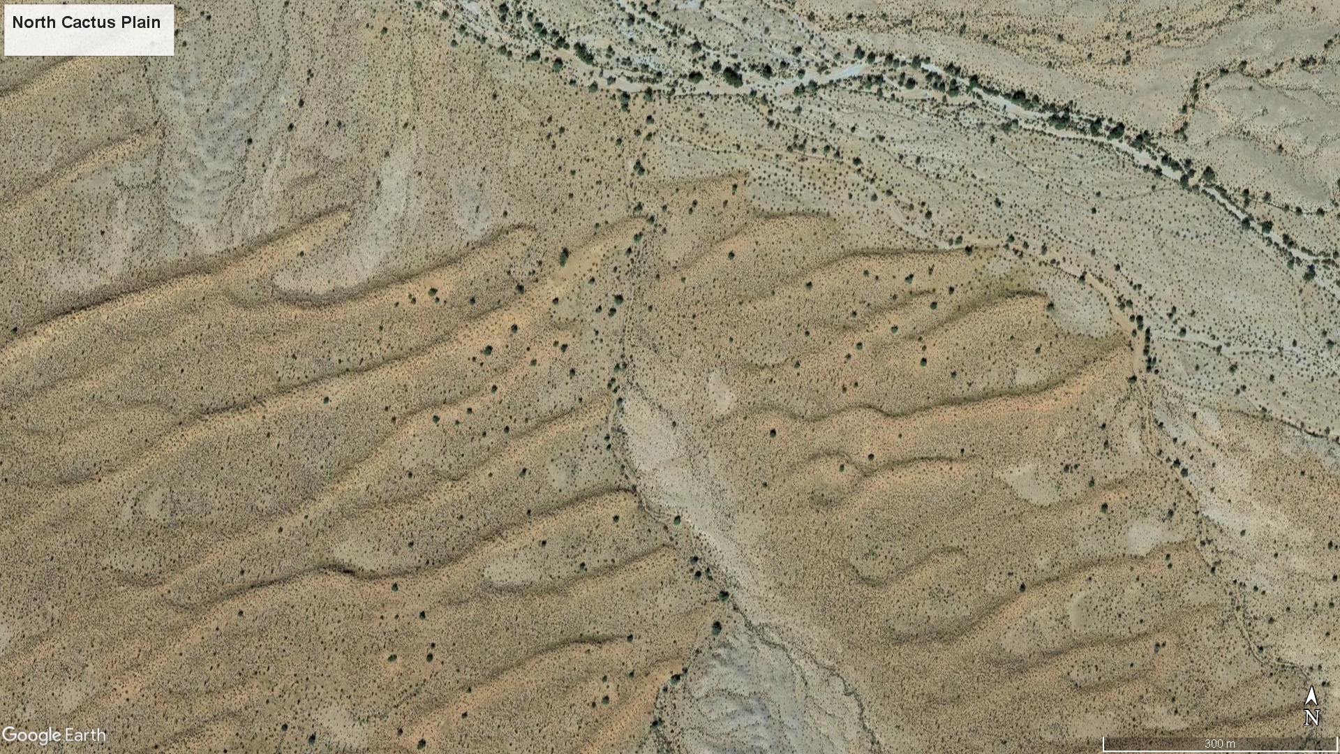 Google Earth image showing partially vegetated dunes